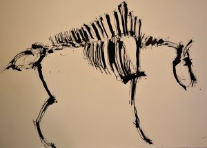 Bison skeletal drawing